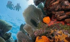 Coral reef off the Florida coast.