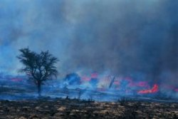 Forest fires cause secondary successions in affected ecosystems.