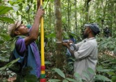 Forest measurement demonstration near Lae by staff of Forest Research Institute, Papua New Guinea.