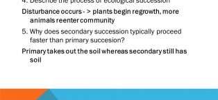 Describe the process of ecological succession