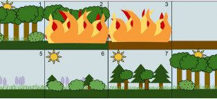 Ecological succession questions