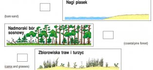 Ecological succession stages