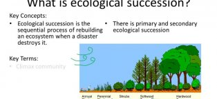 What is succession in Ecology?