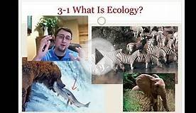 What is Ecology?